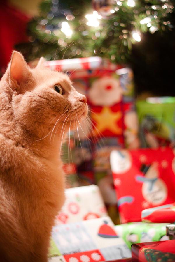 How the Cat Stole Christmas - 2012 Edition by Karelliann