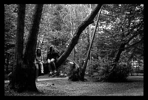 Tree Climbers by Tom-Mosack