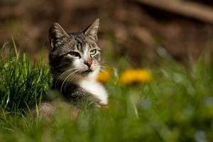 Sweet hunter by Tom-Mosack