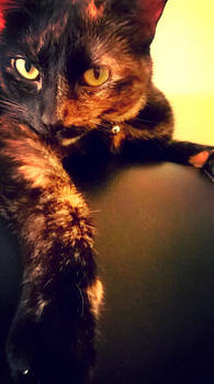 My Handsome Tortoiseshell Kitten Reese's