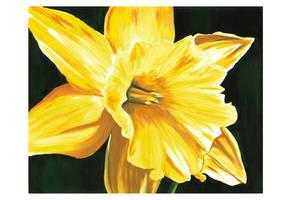 Daffodil Alone