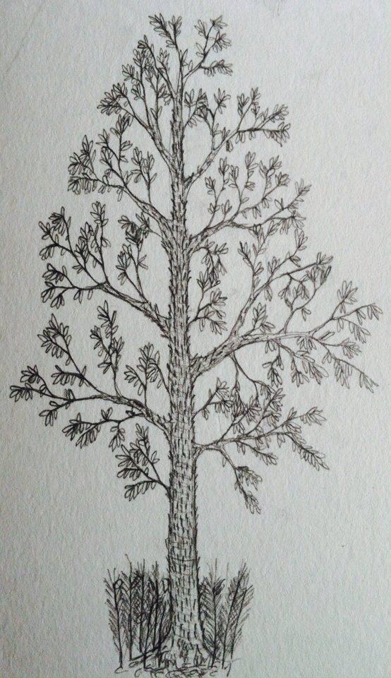 Glossopteris indica by munkas02