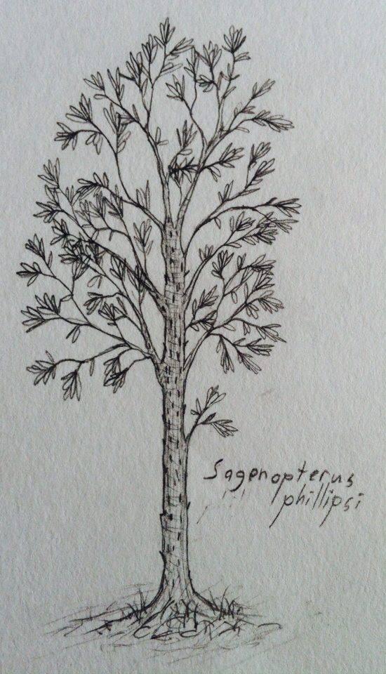 Sagenopterus phillipsii by munkas02