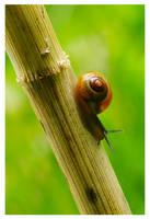 escargot 1 by raskal27600