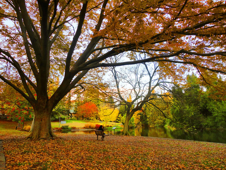 Fall Arboretum by Dunkel-und-Hell