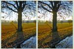 Autumn of November 3D ::: HDR CrossEye Stereoscopy