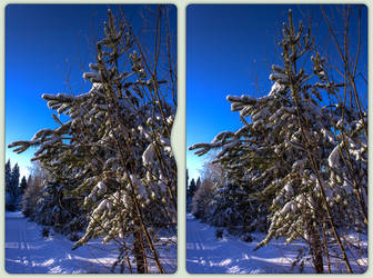 Winter woods 3-D / CrossView / Stereoscopy / HDR by zour