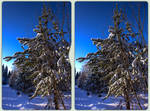 Winter woods 3-D / CrossView / Stereoscopy / HDR