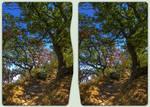 Dry summer 3-D / CrossView / Stereoscopy / HDRaw