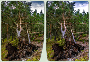 Uprooted 3-D / CrossView / Stereoscopy
