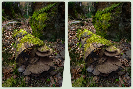 Xylobionts 3-D / CrossView / Stereoscopy