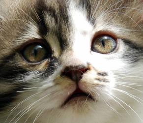 Cat Portrait by pianistcicek