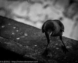 Crow IV