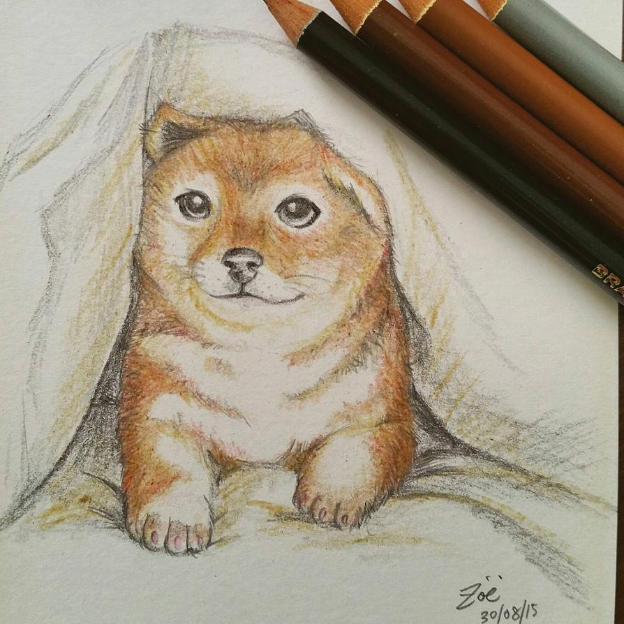 Puppy Sketch #1 - Canislupus Dingo by Vallia