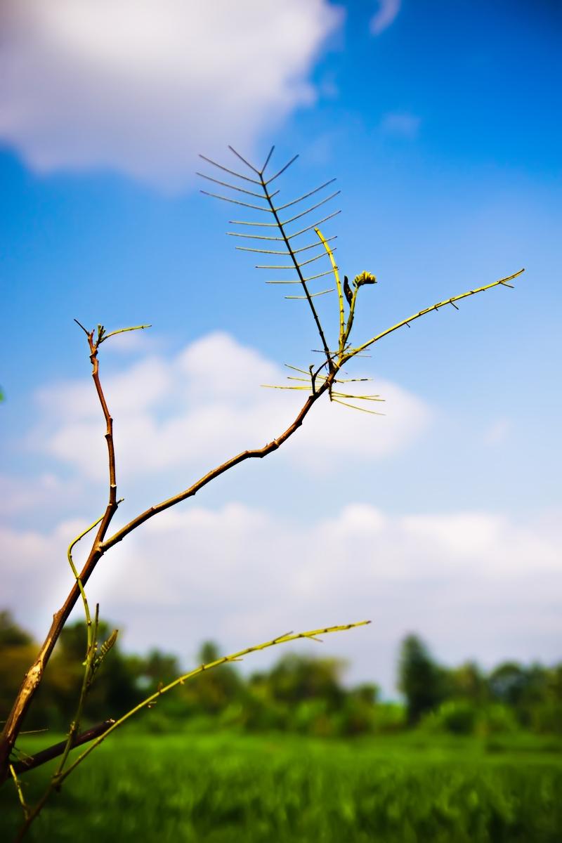Green field by andreawan