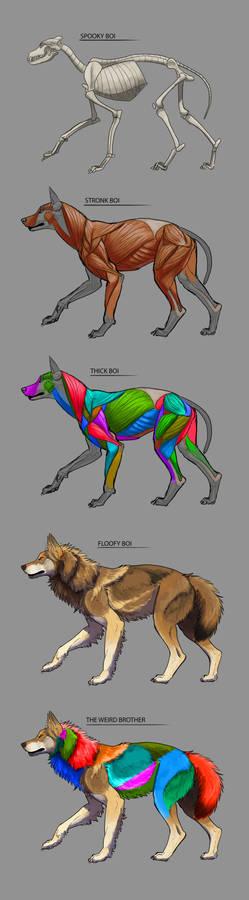 Wolf anatomy study - Level of bois