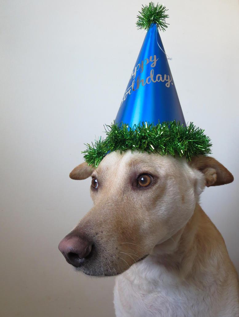 Party Hat by rainylake