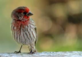 Pretty in Red by rainylake