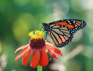 Monarch III by rainylake