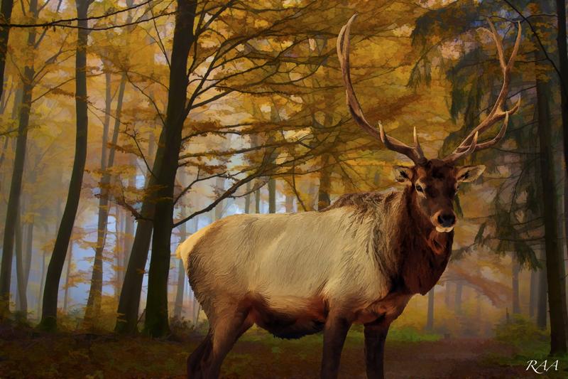 Forest King by Distantstarr