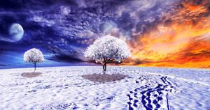 Ice Timber