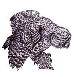 'Kakapo' Bird