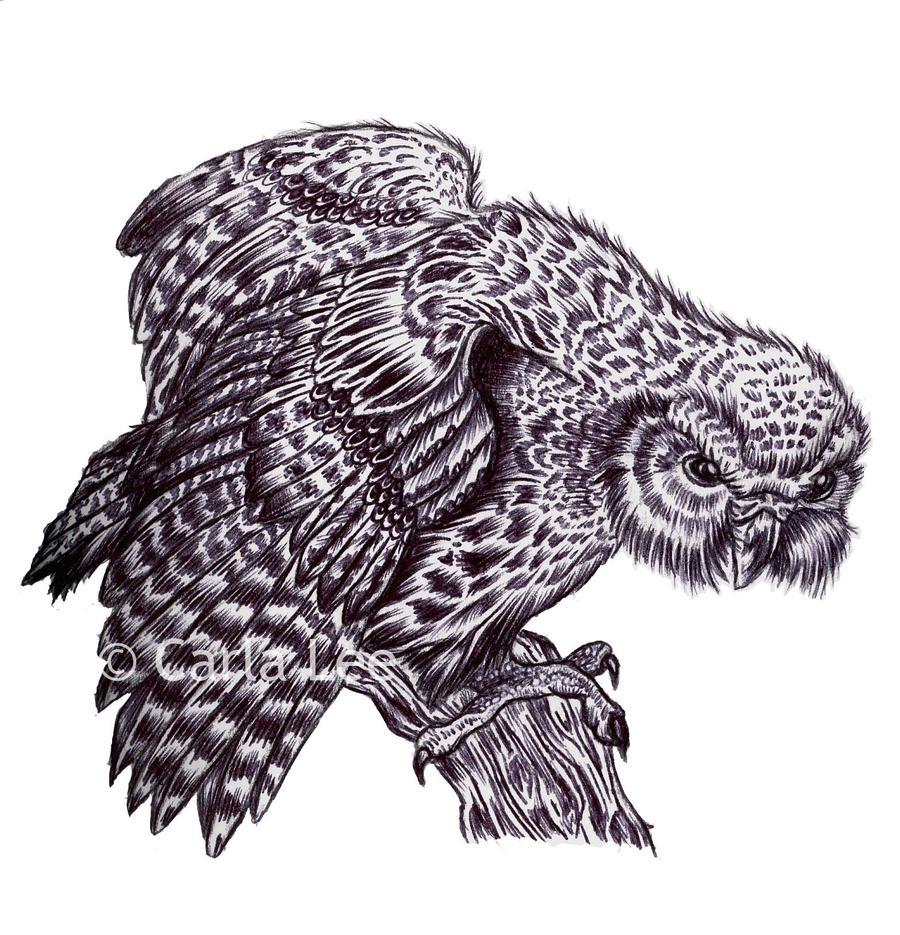 'Kakapo' Bird by Alexiel-Star on deviantART