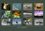Animal photo calendar by Little-Endian
