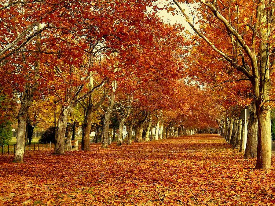 November by nviki89