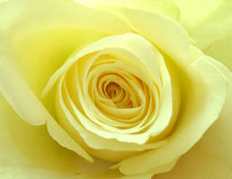 Soft Yellow by nviki89