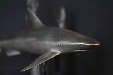 Shark (detail) by andreja-kramberger