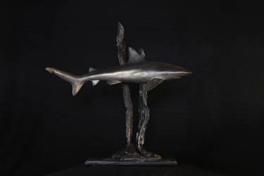 Shark by andreja-kramberger