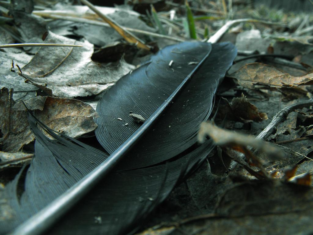 Flightless Feather