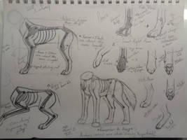 Wolf Anatomy by Axiseron