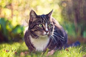 Kitty II by deex-helios