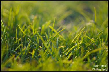 Sun grass by EskelKreig