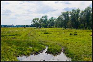 Green meadow by EskelKreig