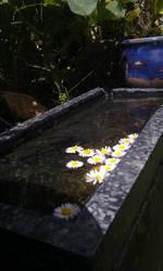Floating beauty by I-Do-Care