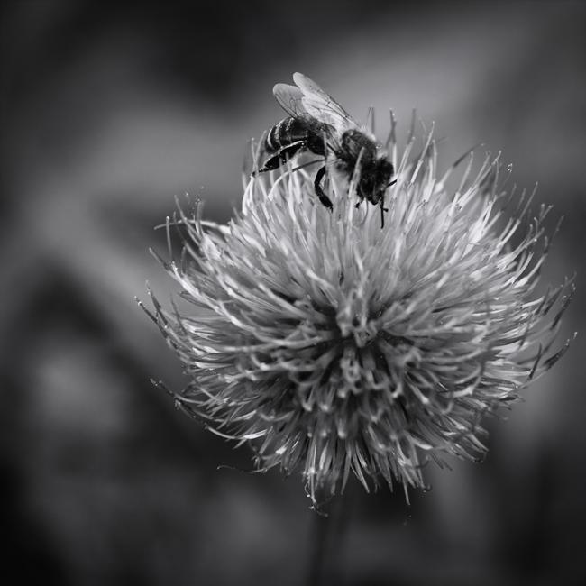 Bee Cause by ghiru