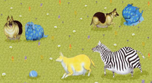 Playing animals