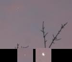 Morning Venus