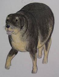 Chubby rottweiler by Soobel