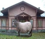 Fat spotty horse