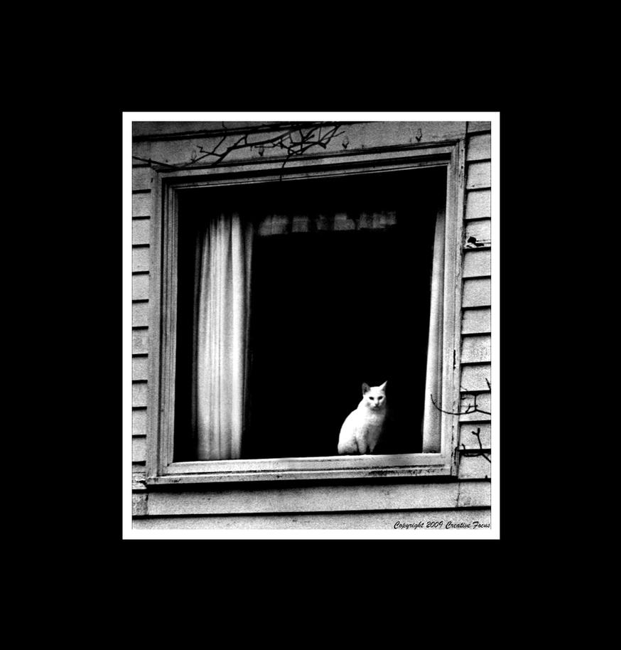 The Cathouse by Trippy4U