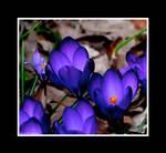 Springtime Of Your Life