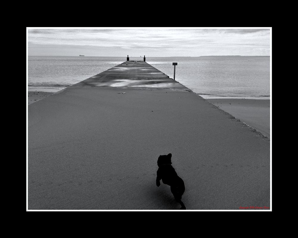 A Gray Day by Trippy4U