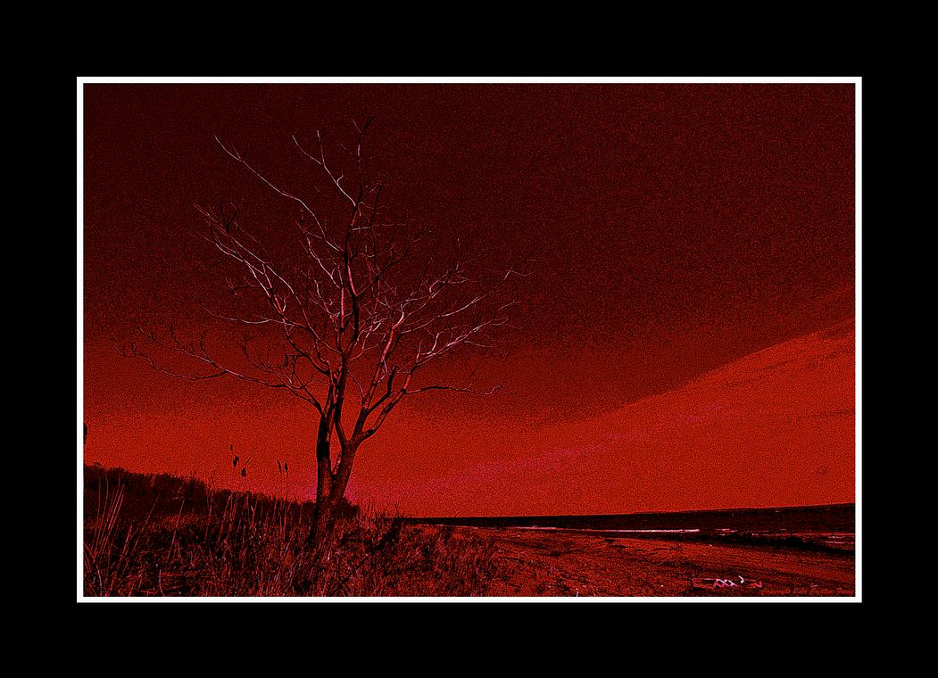 Dead Trees Never Grow by Trippy4U