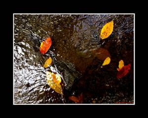 One Last Autumnal Ramble I