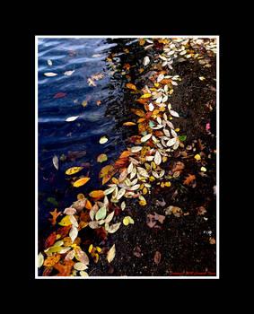 One Last Autumnal Ramble III