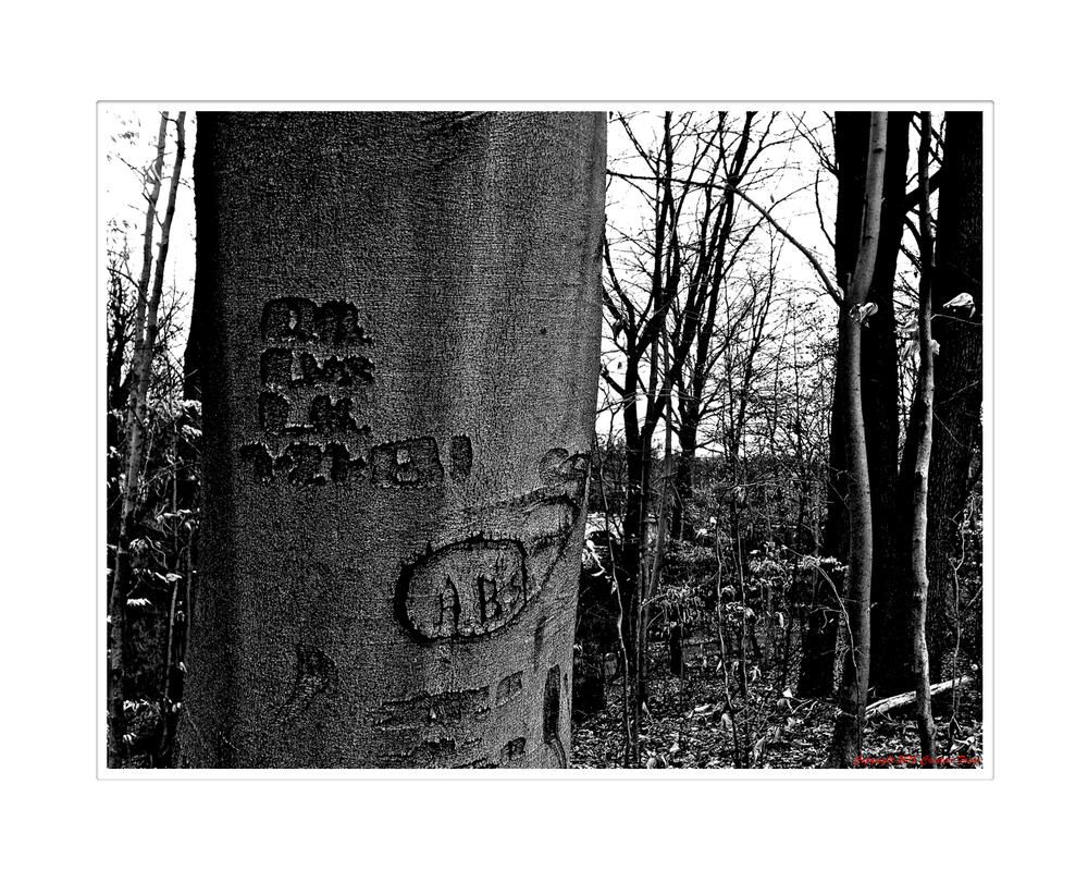 Love Carved In The Skin Of A Tree by Trippy4U